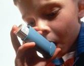 susu kambing etawa untuk asma